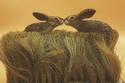 حياة الأرانب في الريف