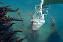 لقطات رائعة ترصد عودة الحياة إلى قنوات البندقية بفضل كورونا 2