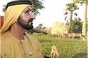 """شاهد الشيخ محمد بن راشد داخل """"سفاري دبي"""": حديقة مذهلة تستحق الزيارة!"""