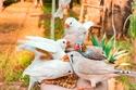 زوار محمية الأوسية يمكنهم إطعام الطيور أثناء زيارتهم لها