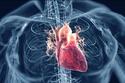 يقلل خطر الإصابة بأمراض القلب والأوعية الدموية