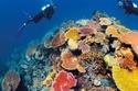 صور: الحيد المرجاني العظيم في استراليا.. حياة بحرية جذابة