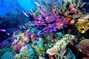 الحيد المرجاني العظيم في استراليا