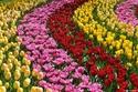 متعة الربيع في أوروبا.. زهور وطيور ومناظر خلابة