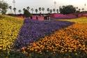 مد فترة مهرجان الزهور والحدائق في السعودية حتى هذا الموعد