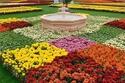 مهرجان الزهور والحدائق بمحافظة ينبع السعودية 2