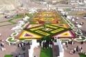مهرجان الزهور والحدائق بمحافظة ينبع السعودية 1