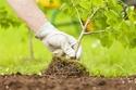 ازرع طعامك للحفاظ على البيئة
