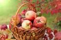 التفاح غني بالألياف والفيتامينات والمعادن