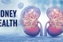 شرب الماء يحافظ على صحة الكلى