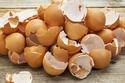 اكتشف الباحثون أن مزيجًا من قشر البيض وأحد أنواع الهلام،