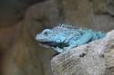 حديقة حيوانات أبوظبي هي أفضل وجهة سياحية للعائلات - 2