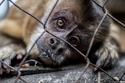 التخلي عن تربية الحيوانات البرية