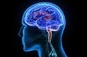 ماذا يفعل طبيب الأعصاب؟