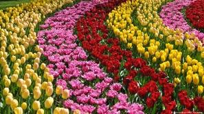 أتاك الربيع الطلق.. هكذا يستقبل فصل الجَمَال في أوروبا