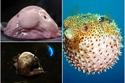 تعرف ماذا وجد العلماء في قاع المحيط: صور مخلوقات عجيبة ستصدمك غرابتها!