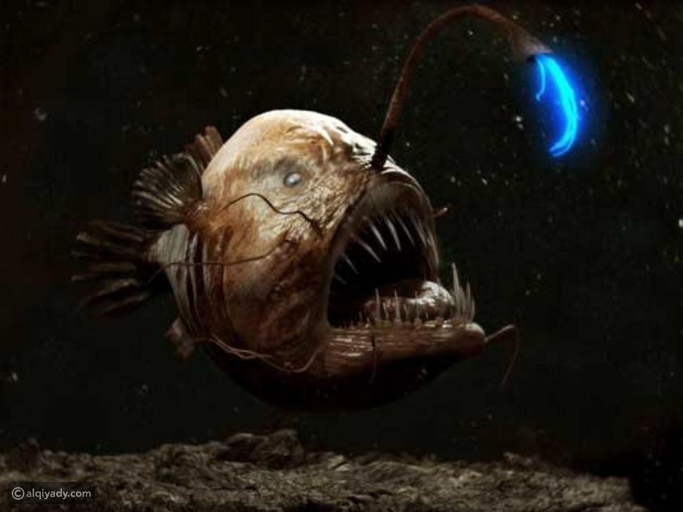 السمكة الصيادة نتاج طفرة جينية حدثت بسبب المواد الكيميائية أو التلوث