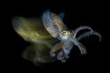 لقطات مذهلة: الصور الفائزة في مسابقة التصوير تحت الماء لعام 2019