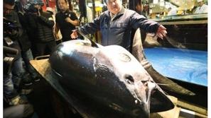 بيع سمكة تونة بـ 3.1 مليون دولار.. هكذا علق صاحبها