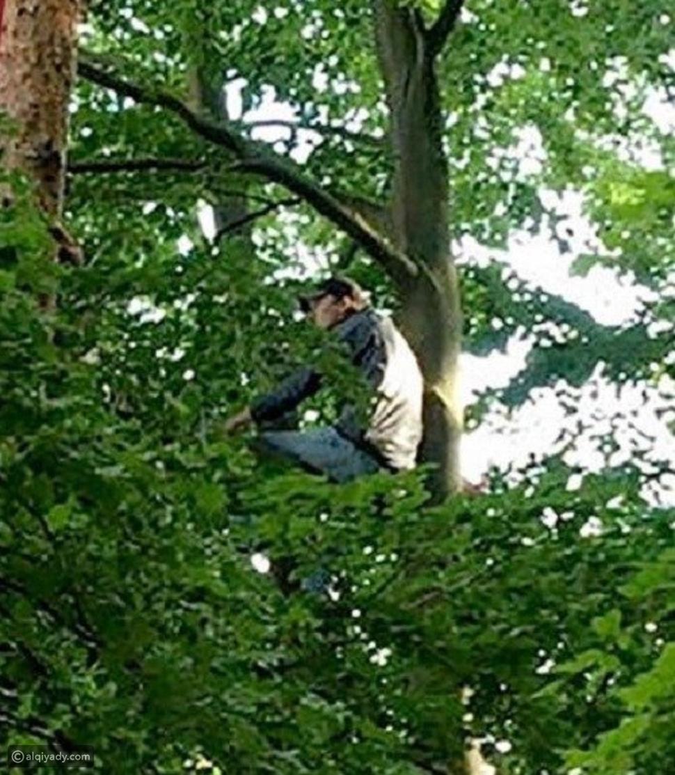 الدوري الألماني: مشجعان يتسلقان شجرة لمشاهدة مباراة فريقهما المفضل