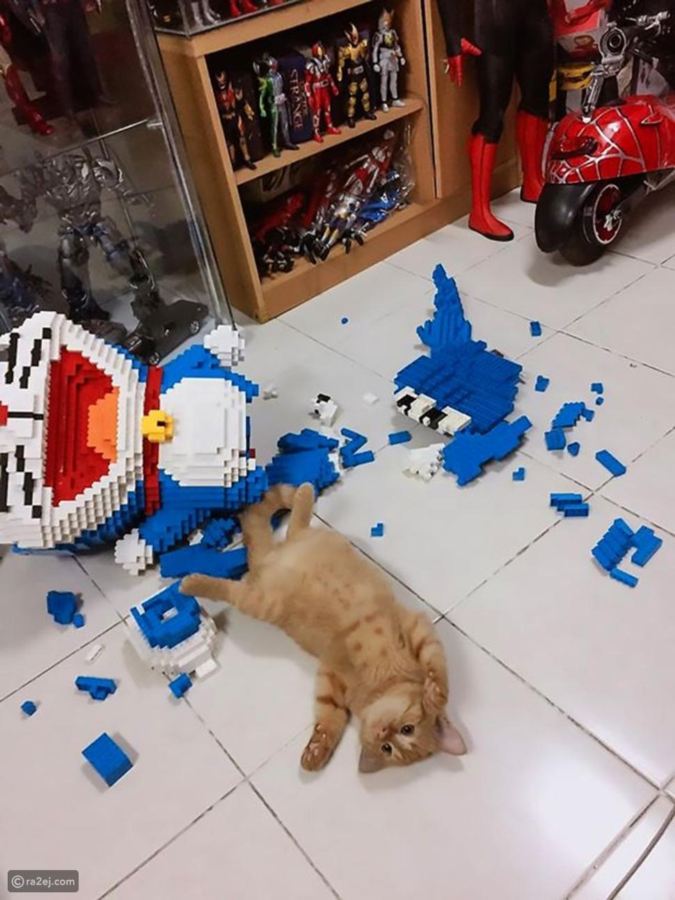 رجل يقضي أسبوعاً في بناء نموذج من 2232 قطعة وقطته تدمره في ثوانِ