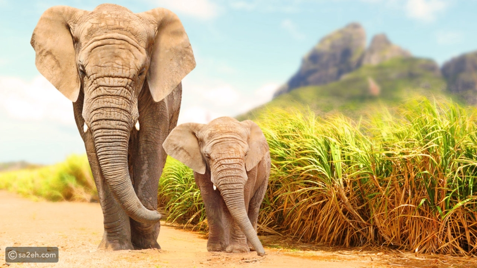 مجرم من نوع خاص: 30 سنة سجن لرجل قتل 500 فيل