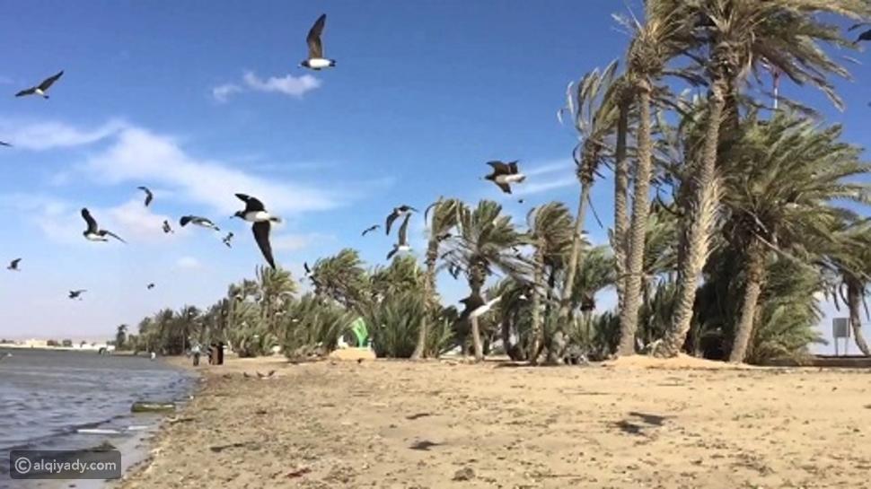 أملج مالديف السعودية: أسباب تجعلها في قائمة وجهاتك السياحية المقبلة