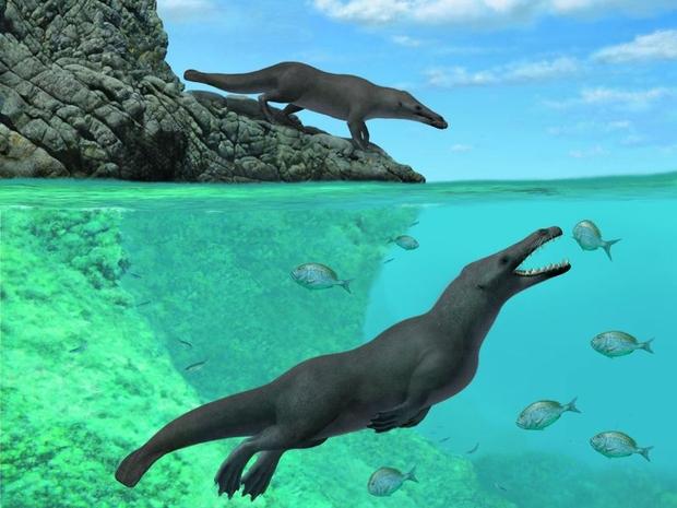 وذلك لحوت برمائي له أربعة أرجعل عاش في البحر والبر
