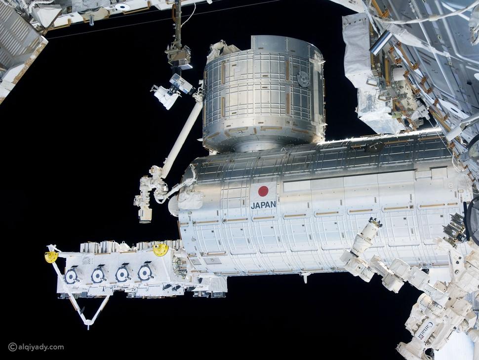 كائن يبقى على قيد الحياة 3 سنوات في الفضاء: فما القصة؟