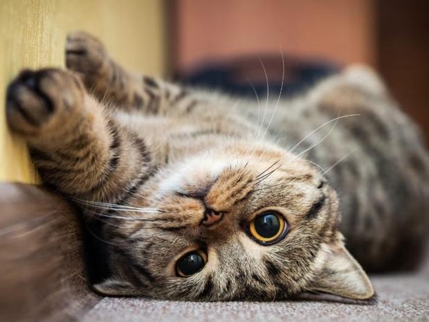 10 علامات تؤكد سعادة قطتك في منزلك