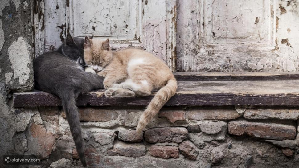 في اليوم العالمي للحيوانات التي لا مأوى لها: ماذا عليك أن تفعل؟