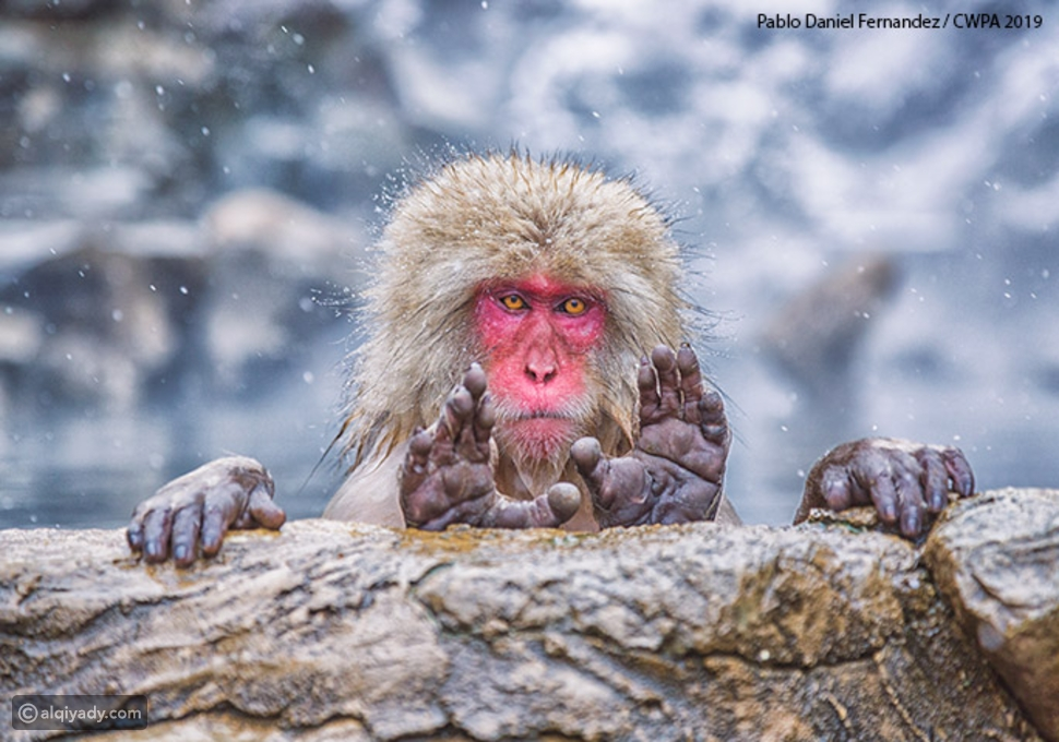شاهد أفضل صور مضحكة للحياة البرية لعام 2019