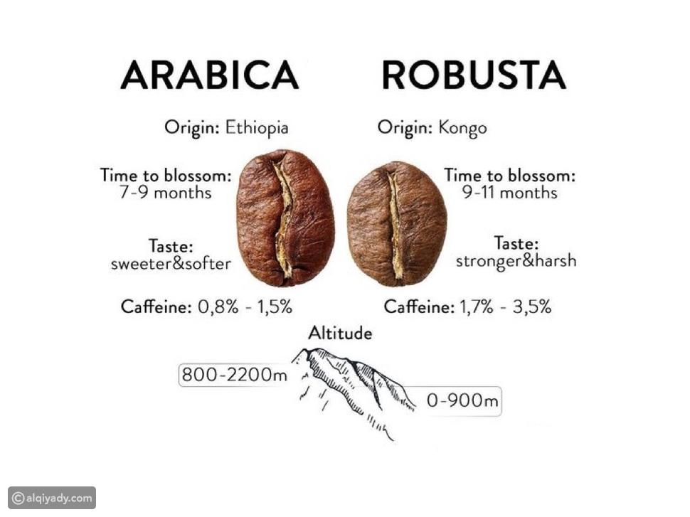 حبوب أرابيكا وحبوب روبوستا