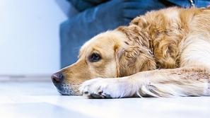قاتلة للبشر.. باحثون يحذرون من إنفلونزا الكلاب
