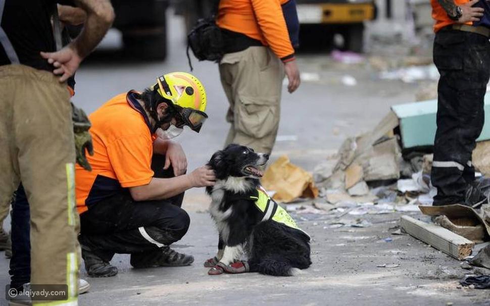 """من تشيلي إلى لبنان: الكلب """"فلاش"""" يعيد الأمل تحت أنقاض انفجار بيروت"""