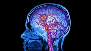 دراسة جديدة تقترب من حل لغز الذكاء البشري