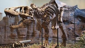 اكتشاف أكبر تيرانوصور في العالم!
