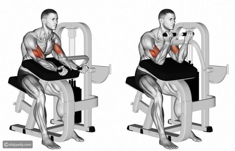 تمارين الباي والتراي للحصول على ذراع قوي للمبتدئين