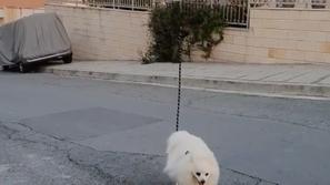 خوفاً من كورونا: رجل يستخدم طريقة ذكية لتنزيه كلبه دون أن يغادر منزله