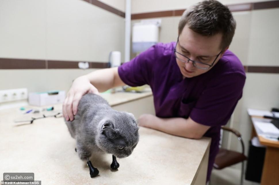 شاهد: طبيب روسي يعطي مخالب صناعية لقطة قضمها الصقيع