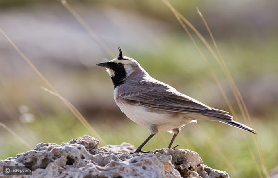 بألوان زاهية: العثور على طائر منقرض عمره 46 ألف عام
