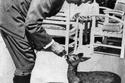قائد النازية، أدولف هتلر،