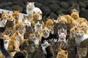 فيديو وصور لجزيرة يابانية تحتلها القطط فقط...هل تجرؤ على زيارتها؟