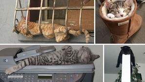 أطرف 30 صورة لأغرب الأماكن التي تختارها القطط للنوم فيها