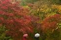 فصل الخريف في غرب إنجلترا