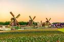 حديقة Miracle Garden أكبر حديقة زهور في العالم بدبي