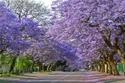 لماذا عليك زيارة جنوب إفريقيا ولو مرة واحدة في حياتك؟! 15 صورة ستقنعك بالسبب!