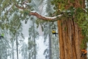 حديقة سيكويا الوطنية في كاليفورنيا التي تتيح لزوارها إمكانية مشاهدة السفوح الوعرة.