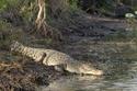 أكبر منطقة برية شبه استوائية في الولايات المتحدة، وهي موطن للتماسيح، السلاحف جلدية الظهر المهددة بالانقراض، بالإضافة الى أكثر من 350 نوعاً من الطيور.