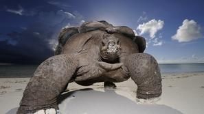 صور الكائنات البحرية بأحجام لا تصدق فقط في جزيرة ألدابارا!